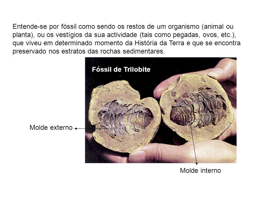 Entende-se por fóssil como sendo os restos de um organismo (animal ou planta), ou os vestígios da sua actividade (tais como pegadas, ovos, etc.), que