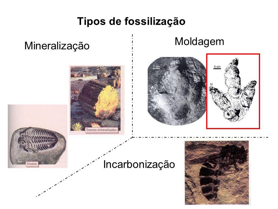 Tipos de fossilização Moldagem Incarbonização Mineralização