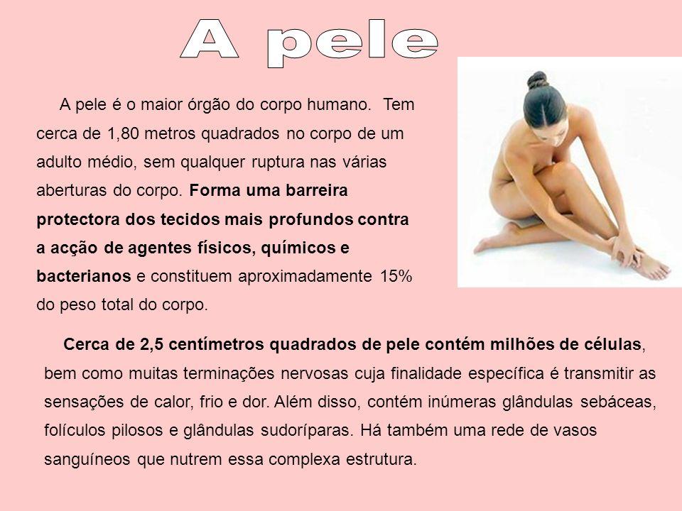 A pele é o maior órgão do corpo humano. Tem cerca de 1,80 metros quadrados no corpo de um adulto médio, sem qualquer ruptura nas várias aberturas do c