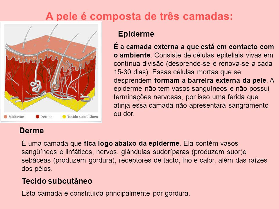 Tecido subcutâneo Derme Epiderme A pele é composta de três camadas: É a camada externa a que está em contacto com o ambiente. Consiste de células epit
