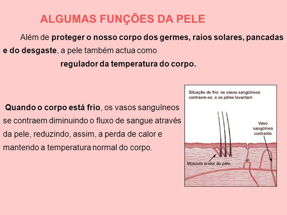 ALGUMAS FUNÇÕES DA PELE Quando o corpo está frio, os vasos sanguíneos se contraem diminuindo o fluxo de sangue através da pele, reduzindo, assim, a pe