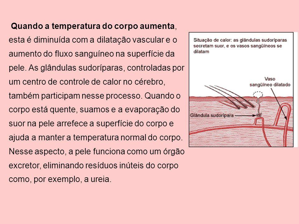 Quando a temperatura do corpo aumenta, esta é diminuída com a dilatação vascular e o aumento do fluxo sanguíneo na superfície da pele. As glândulas su