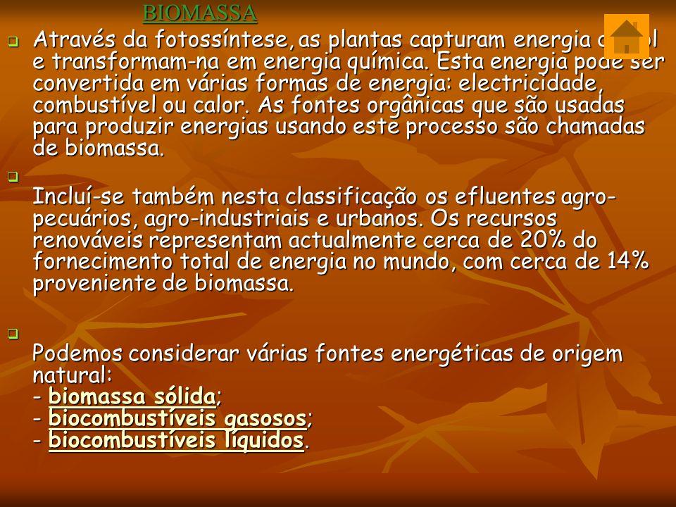 BIOMASSA BIOMASSA Através da fotossíntese, as plantas capturam energia do sol e transformam-na em energia química.