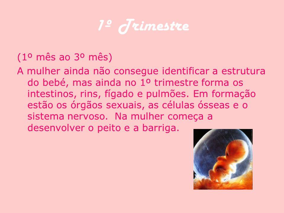 1º Trimestre (1º mês ao 3º mês) A mulher ainda não consegue identificar a estrutura do bebé, mas ainda no 1º trimestre forma os intestinos, rins, fíga
