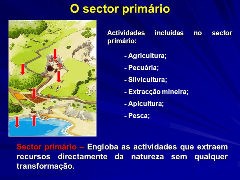O sector primário Sector primário – Engloba as actividades que extraem recursos directamente da natureza sem qualquer transformação. Actividades inclu