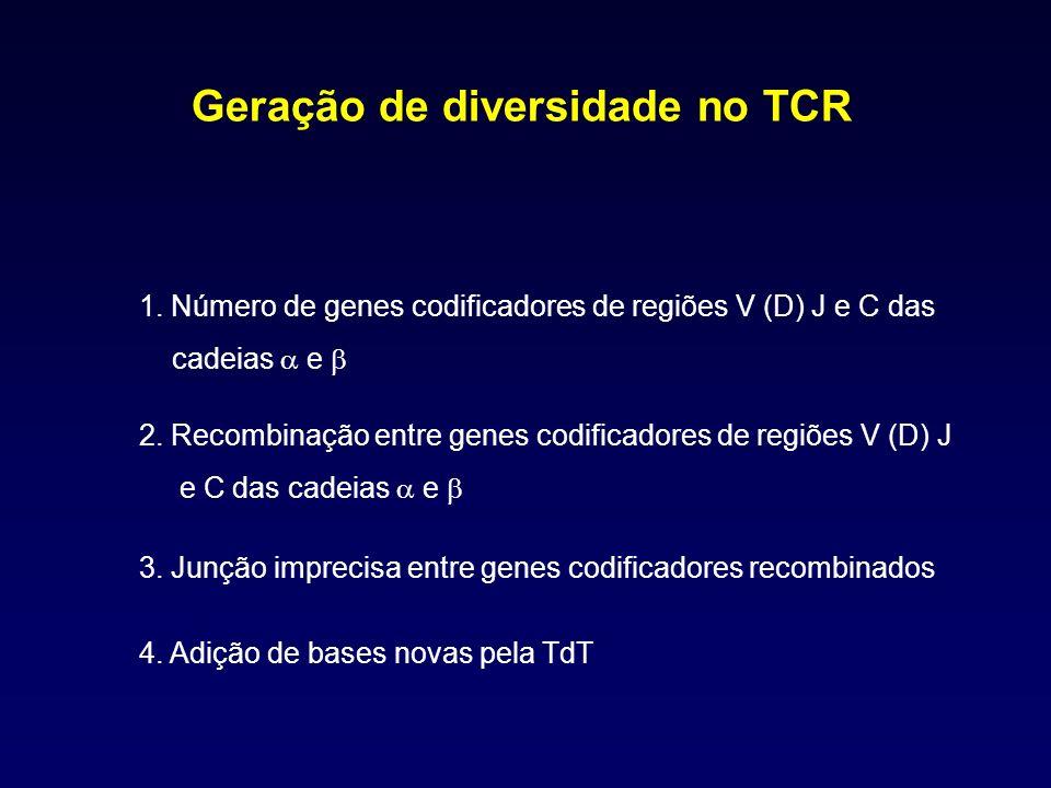 Geração de diversidade no TCR 1. Número de genes codificadores de regiões V (D) J e C das cadeias e 2. Recombinação entre genes codificadores de regiõ