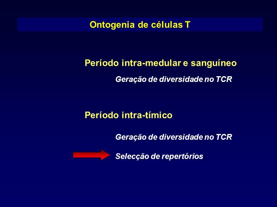 Ontogenia de células T Período intra-medular e sanguíneo Período intra-tímico Geração de diversidade no TCR Selecção de repertórios Geração de diversi