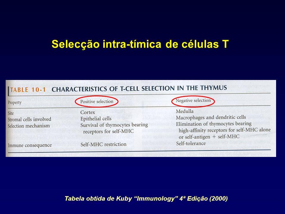 Selecção intra-tímica de células T Tabela obtida de Kuby Immunology 4ª Edição (2000)