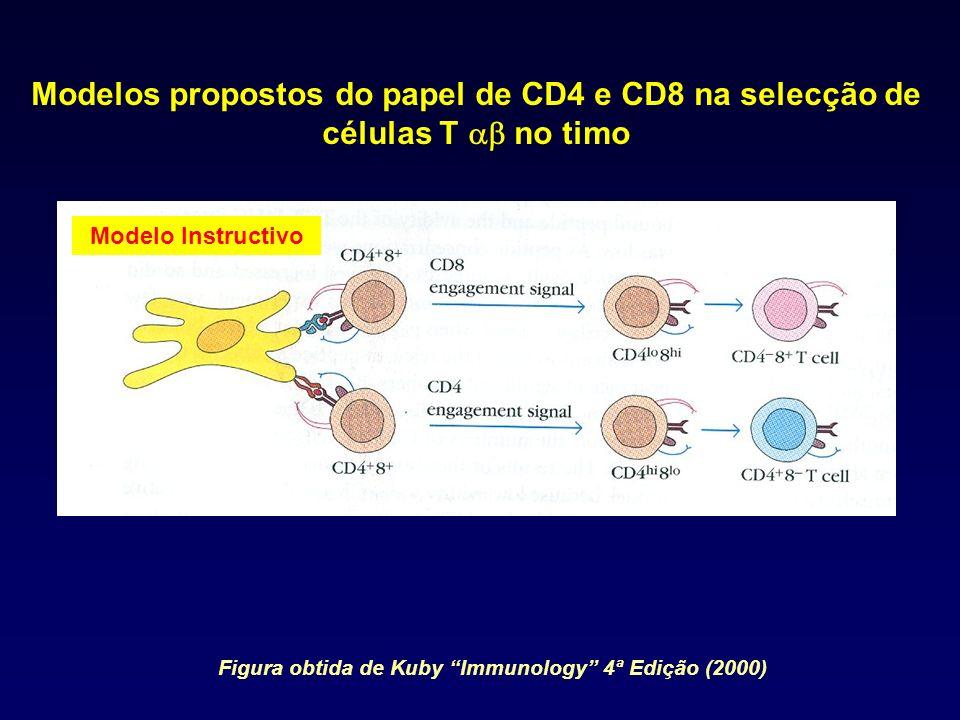 Modelos propostos do papel de CD4 e CD8 na selecção de células T no timo Modelo Instructivo Figura obtida de Kuby Immunology 4ª Edição (2000)