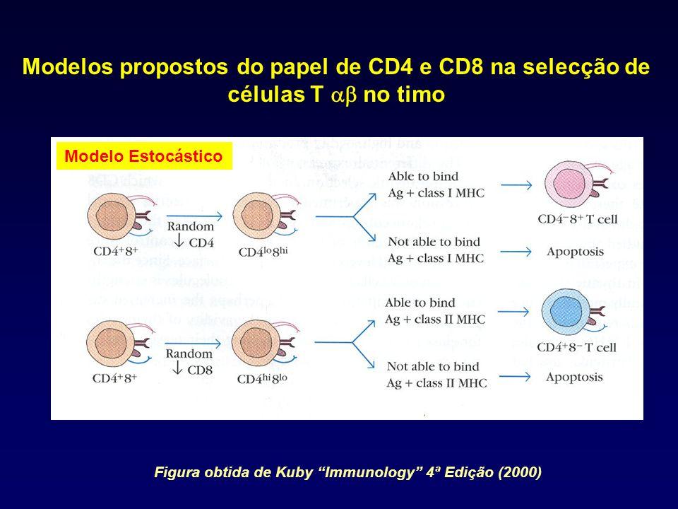 Modelo Estocástico Modelos propostos do papel de CD4 e CD8 na selecção de células T no timo Figura obtida de Kuby Immunology 4ª Edição (2000)