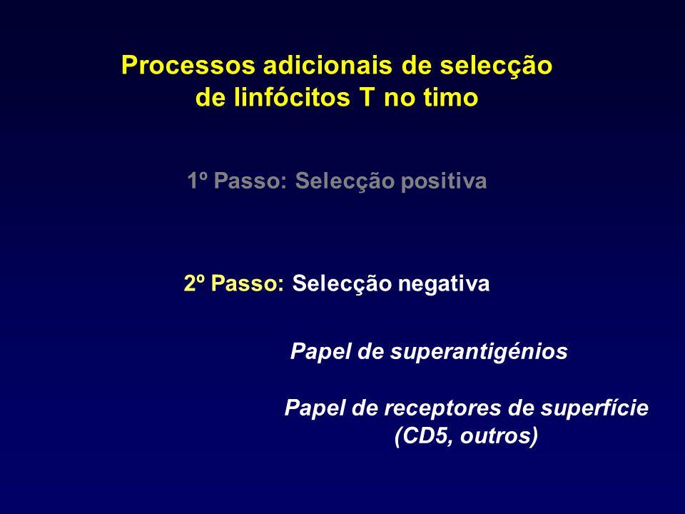 Processos adicionais de selecção de linfócitos T no timo 1º Passo: Selecção positiva 2º Passo: Selecção negativa Papel de superantigénios Papel de rec
