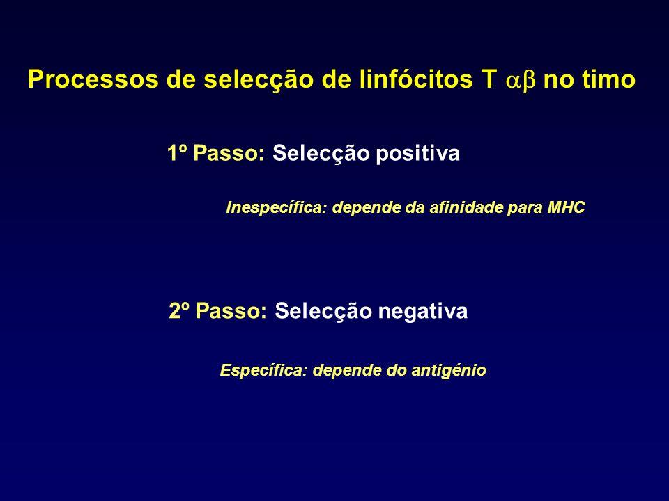 Processos de selecção de linfócitos T no timo 1º Passo: Selecção positiva 2º Passo: Selecção negativa Inespecífica: depende da afinidade para MHC Espe