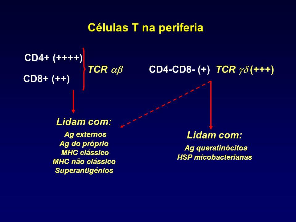 Células T na periferia CD4+ (++++) CD8+ (++) CD4-CD8- (+) TCR (+++)TCR Lidam com: Ag externos Ag do próprio MHC clássico MHC não clássico Superantigén