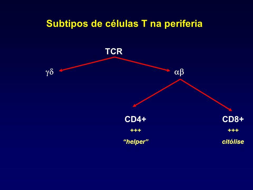 Subtipos de células T na periferia TCR CD4+CD8+ +++ citólise +++ helper