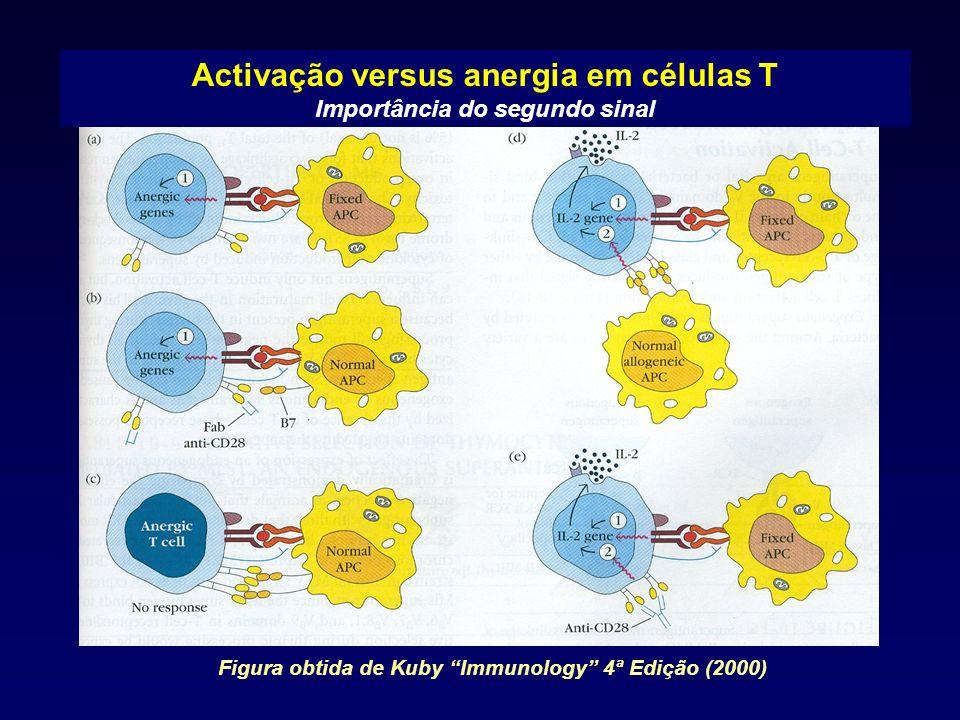 Activação versus anergia em células T Importância do segundo sinal Figura obtida de Kuby Immunology 4ª Edição (2000)