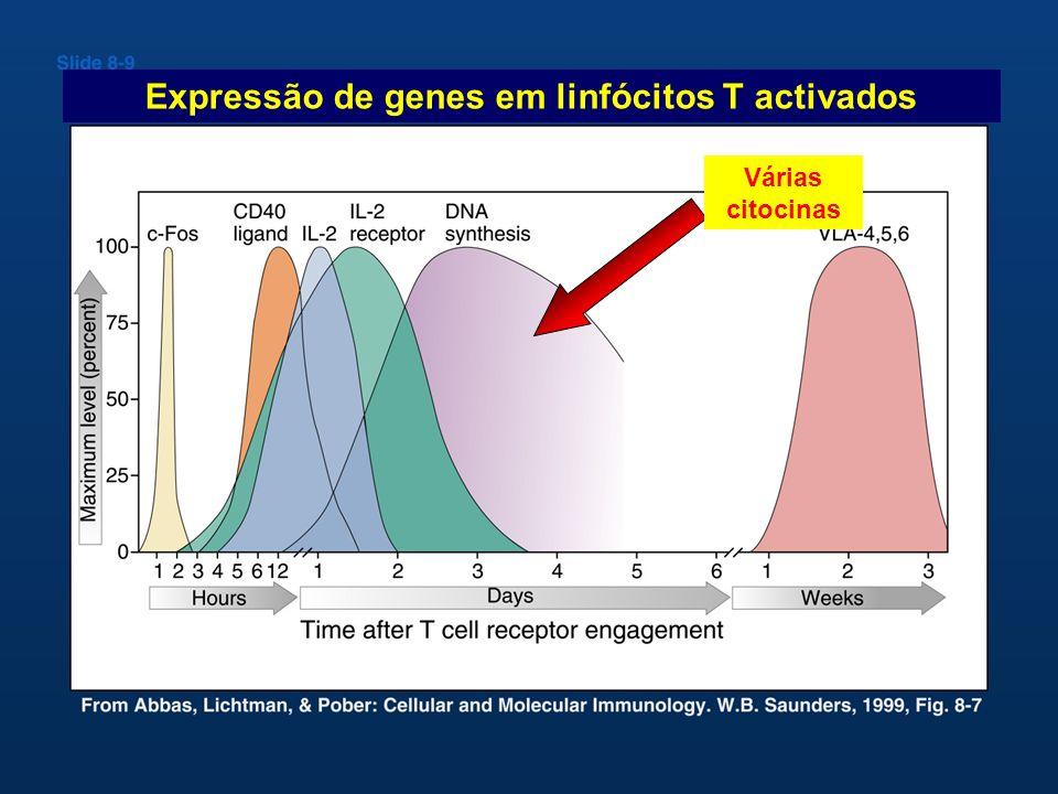 Expressão de genes em linfócitos T activados Várias citocinas