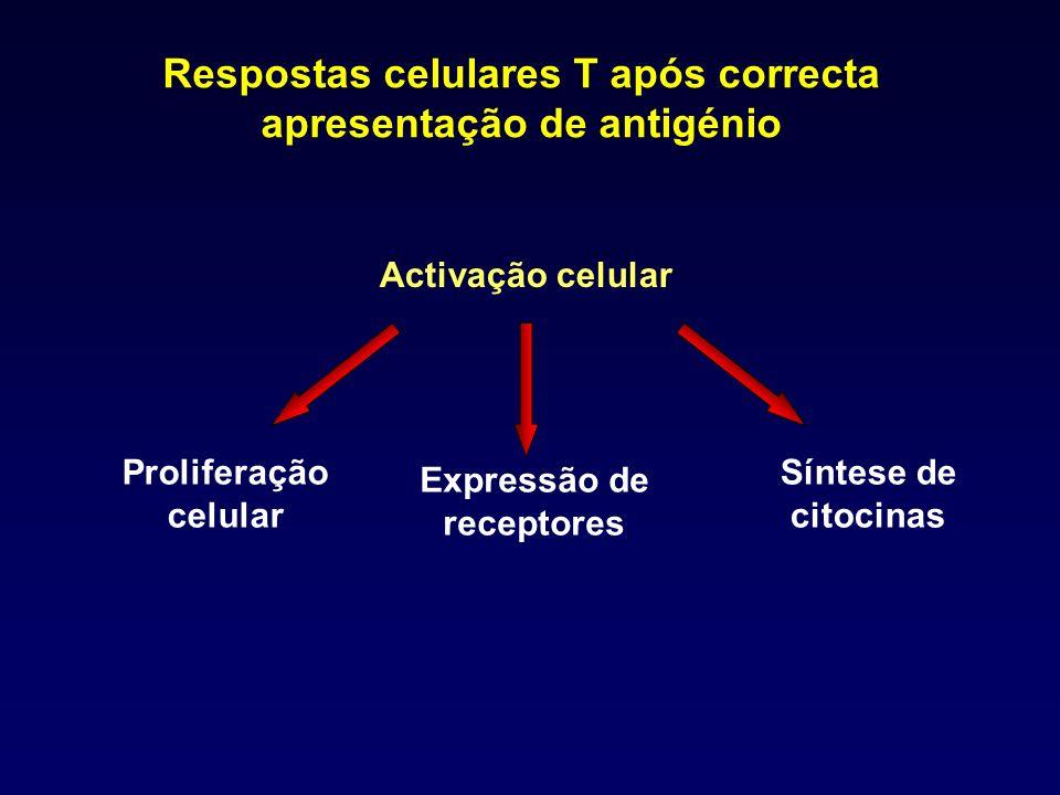 Respostas celulares T após correcta apresentação de antigénio Activação celular Síntese de citocinas Proliferação celular Expressão de receptores