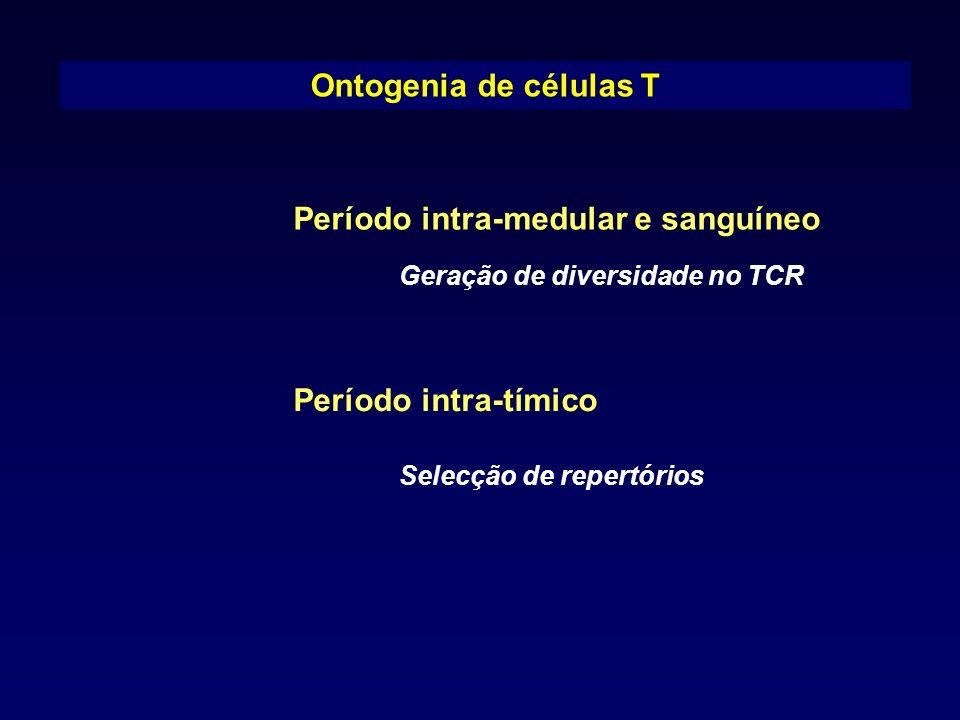 Ontogenia de células T Período intra-medular e sanguíneo Período intra-tímico Selecção de repertórios Geração de diversidade no TCR