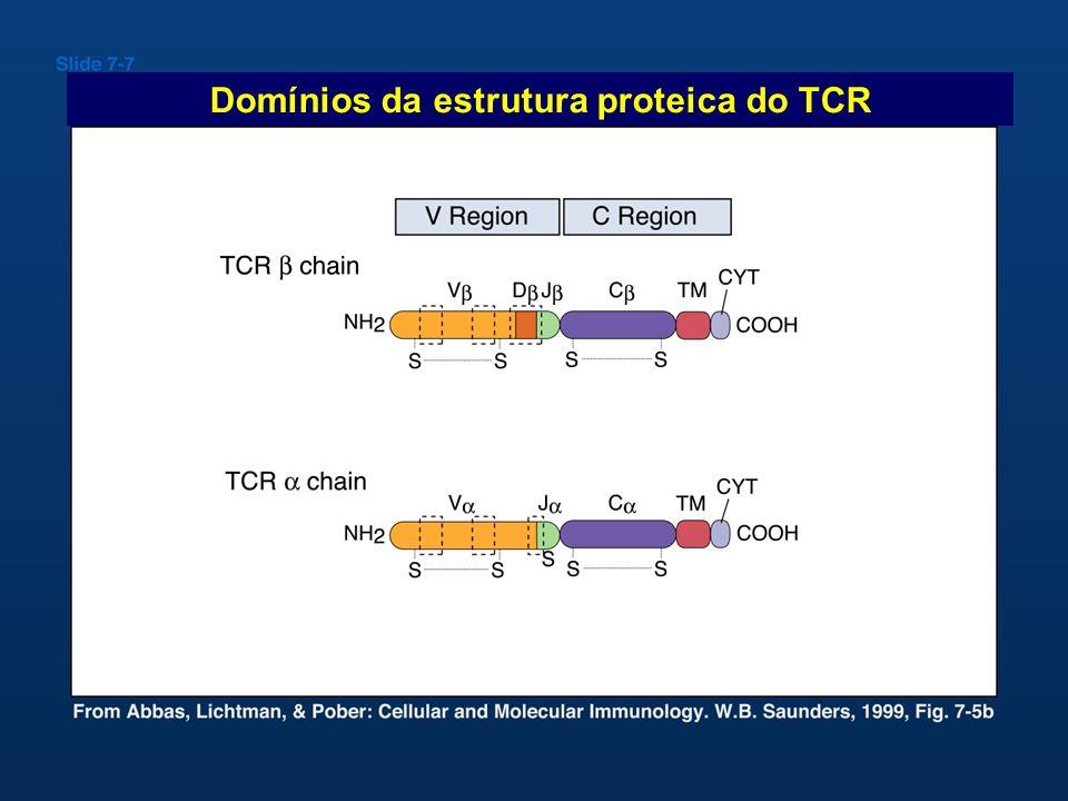 Domínios da estrutura proteica do TCR
