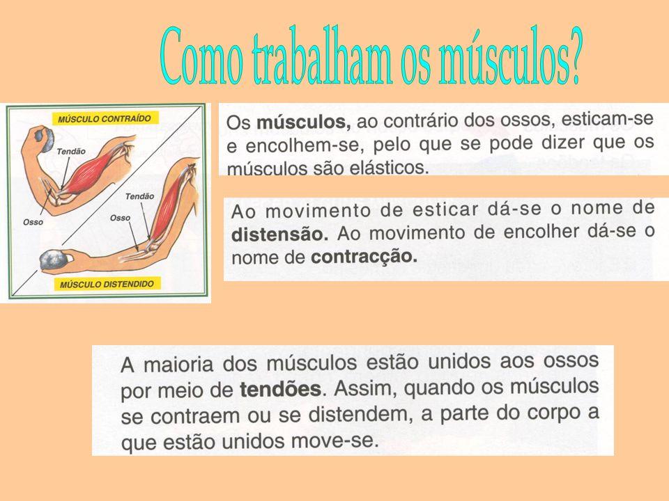 Os músculos podem ter dois tipo de movimentos