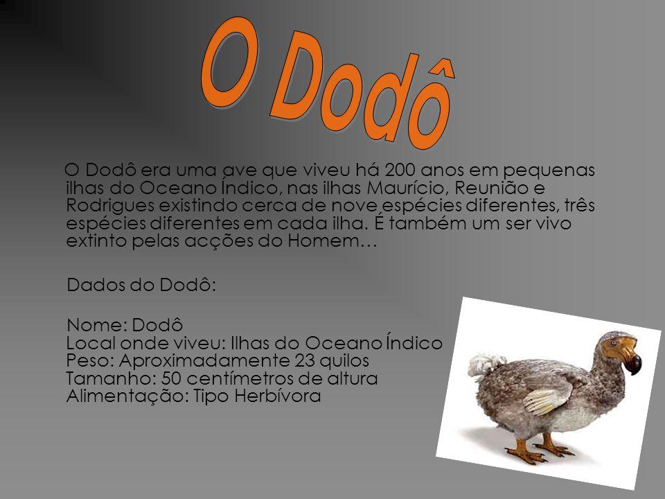 O Dodô era uma ave que viveu há 200 anos em pequenas ilhas do Oceano Índico, nas ilhas Maurício, Reunião e Rodrigues existindo cerca de nove espécies