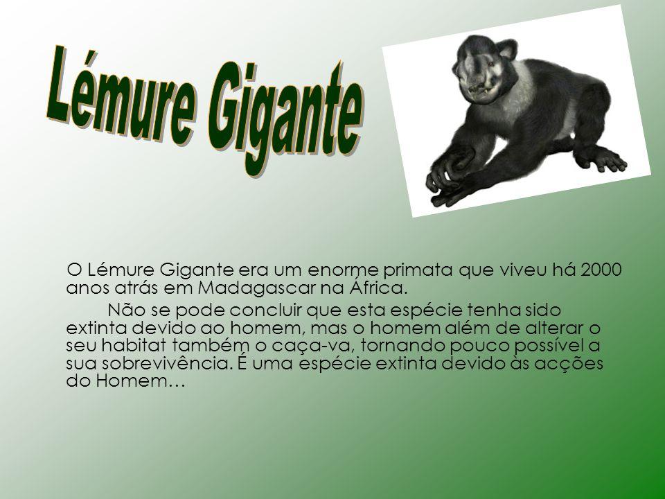 O Lémure Gigante era um enorme primata que viveu há 2000 anos atrás em Madagascar na África. Não se pode concluir que esta espécie tenha sido extinta