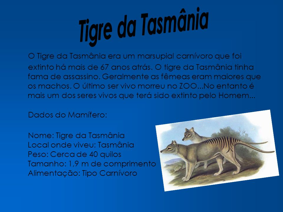O Tigre da Tasmânia era um marsupial carnívoro que foi extinto há mais de 67 anos atrás. O tigre da Tasmânia tinha fama de assassino. Geralmente as fê