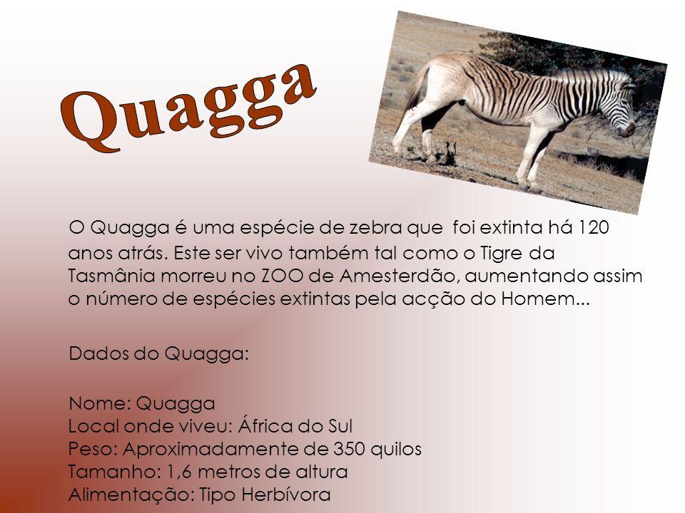 O Quagga é uma espécie de zebra que foi extinta há 120 anos atrás. Este ser vivo também tal como o Tigre da Tasmânia morreu no ZOO de Amesterdão, aume