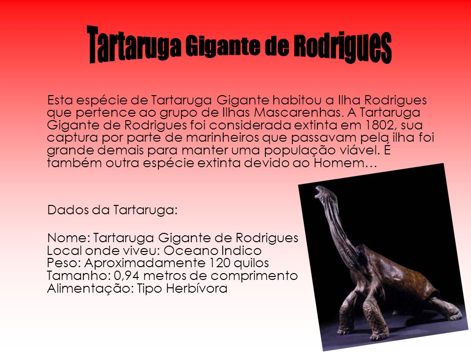 Esta espécie de Tartaruga Gigante habitou a Ilha Rodrigues que pertence ao grupo de Ilhas Mascarenhas. A Tartaruga Gigante de Rodrigues foi considerad