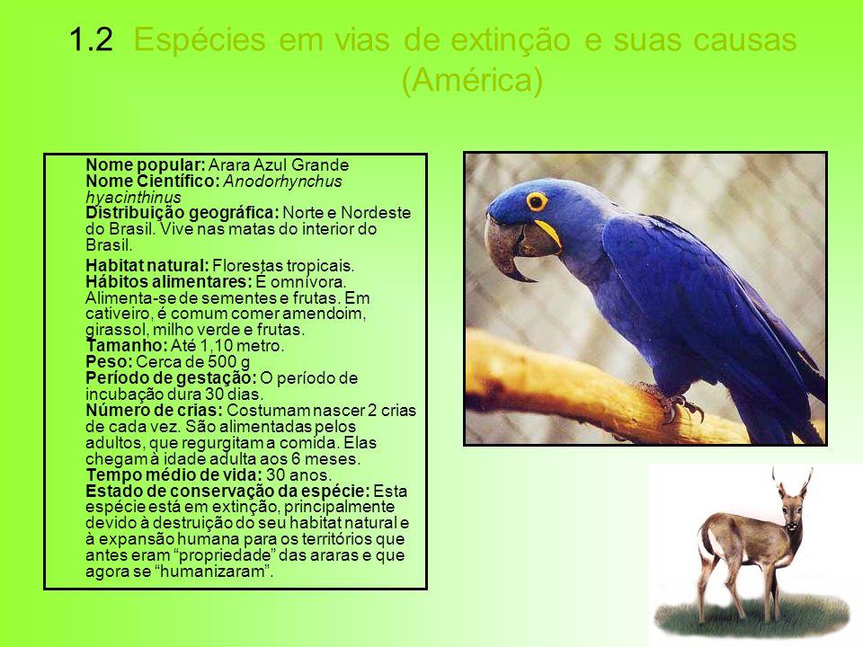1.2 Espécies em vias de extinção e suas causas (América) Nome popular: Arara Azul Grande Nome Científico: Anodorhynchus hyacinthinus Distribuição geog