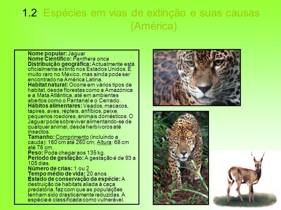 1.2 Espécies em vias de extinção e suas causas (América) Nome popular: Jaguar Nome Científico: Panthera onca Distribuição geográfica: Actualmente está