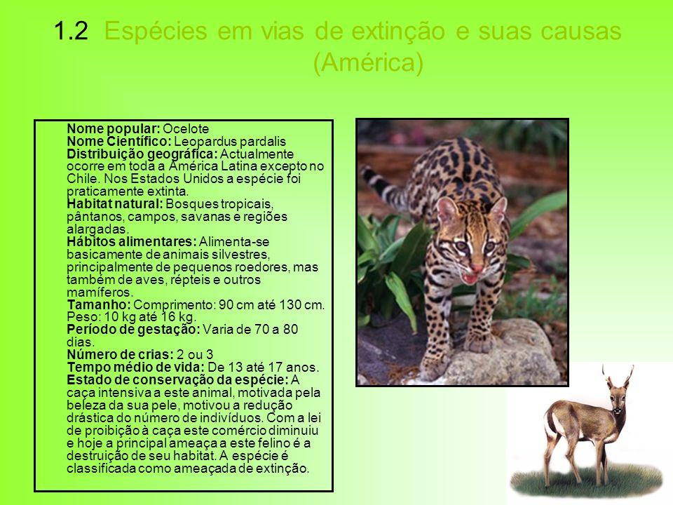 1.2 Espécies em vias de extinção e suas causas (América) Nome popular: Ocelote Nome Científico: Leopardus pardalis Distribuição geográfica: Actualment