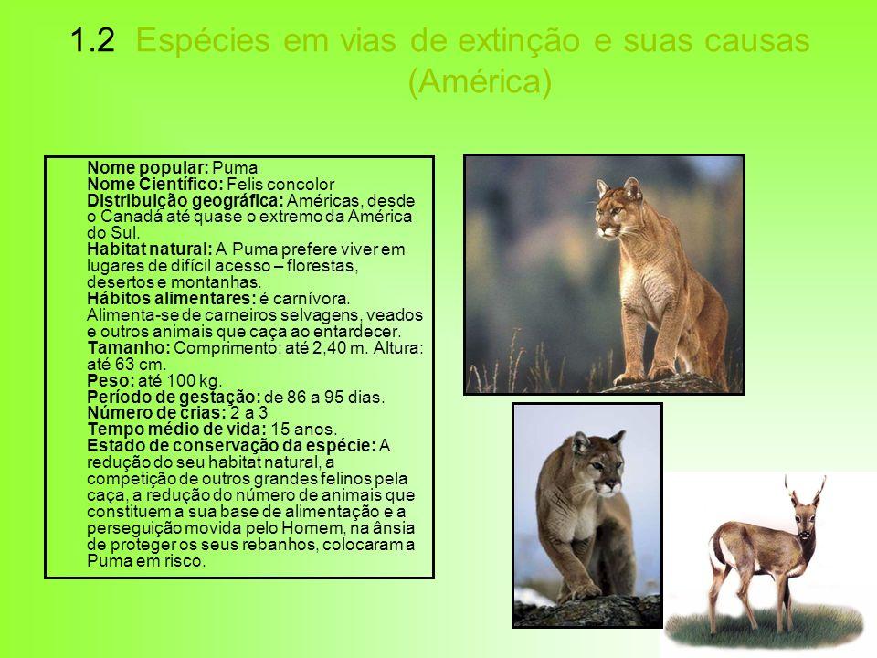 1.2 Espécies em vias de extinção e suas causas (América) Nome popular: Puma Nome Científico: Felis concolor Distribuição geográfica: Américas, desde o