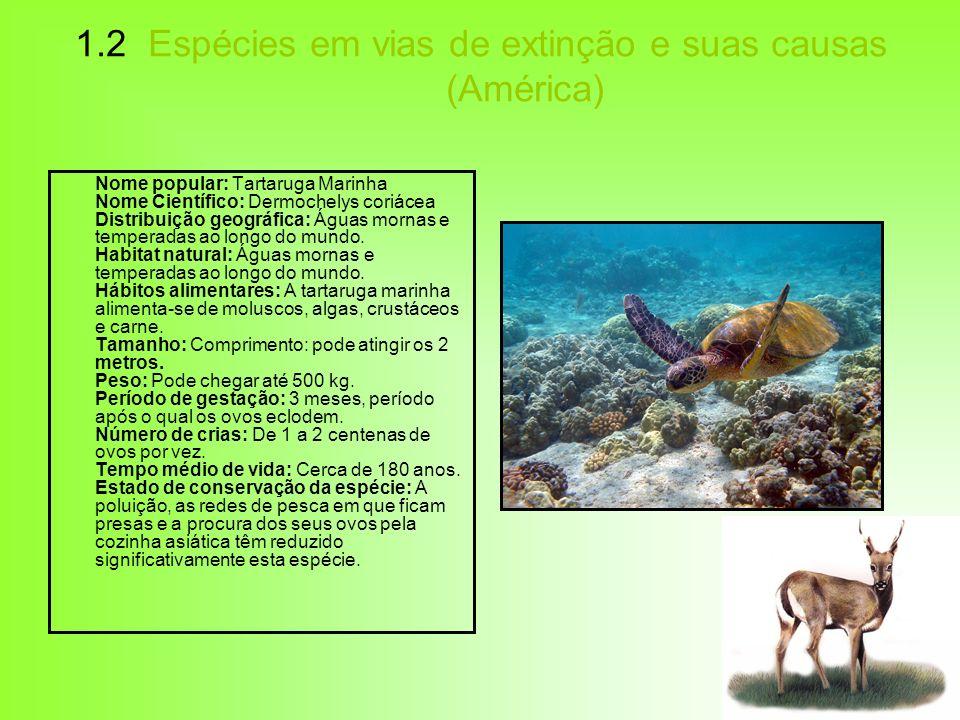 1.2 Espécies em vias de extinção e suas causas (América) Nome popular: Tartaruga Marinha Nome Científico: Dermochelys coriácea Distribuição geográfica