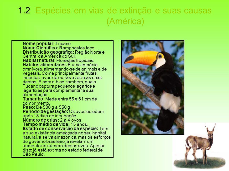 1.2 Espécies em vias de extinção e suas causas (América) Nome popular: Tucano Nome Científico: Ramphastos toco Distribuição geográfica: Região Norte e