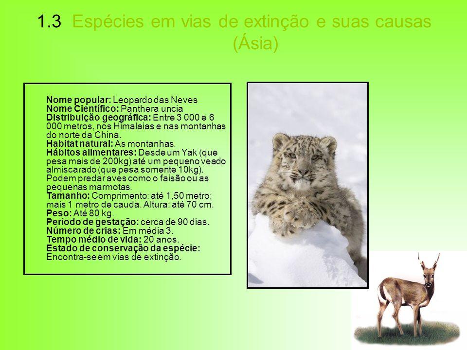 1.3 Espécies em vias de extinção e suas causas (Ásia) Nome popular: Leopardo das Neves Nome Científico: Panthera uncia Distribuição geográfica: Entre