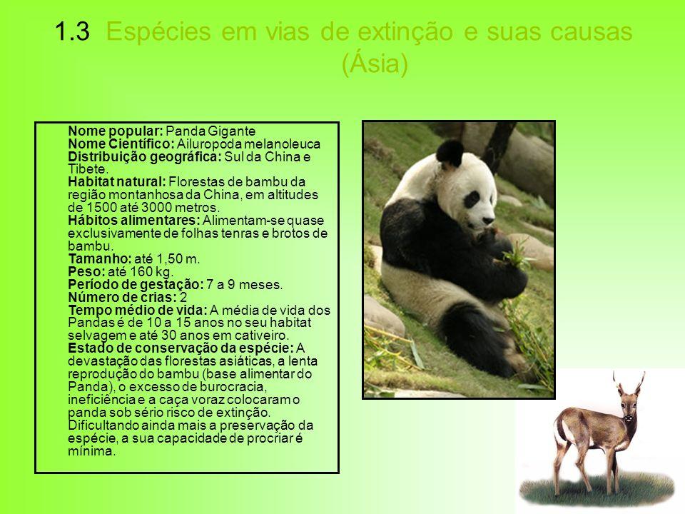 1.3 Espécies em vias de extinção e suas causas (Ásia) Nome popular: Panda Gigante Nome Científico: Ailuropoda melanoleuca Distribuição geográfica: Sul
