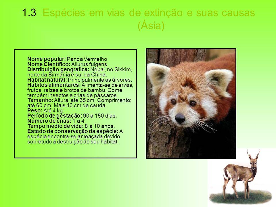 1.3 Espécies em vias de extinção e suas causas (Ásia) Nome popular: Panda Vermelho Nome Científico: Ailurus fulgens Distribuição geográfica: Nepal, no