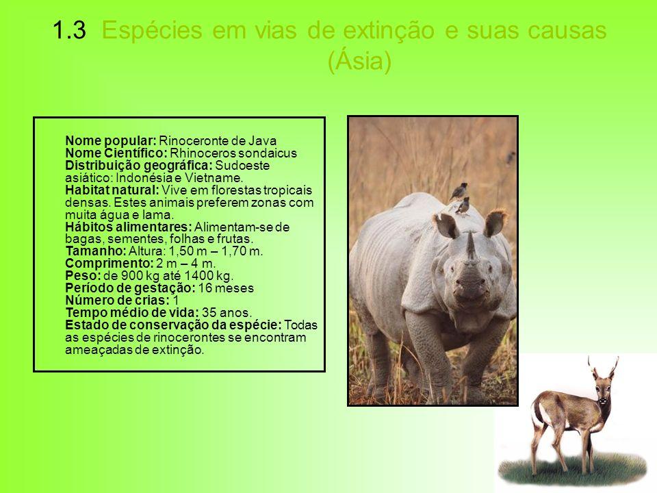1.3 Espécies em vias de extinção e suas causas (Ásia) Nome popular: Rinoceronte de Java Nome Científico: Rhinoceros sondaicus Distribuição geográfica: