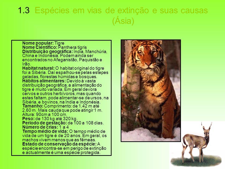 1.3 Espécies em vias de extinção e suas causas (Ásia) Nome popular: Tigre Nome Científico: Panthera tigris Distribuição geográfica: Índia, Manchúria,