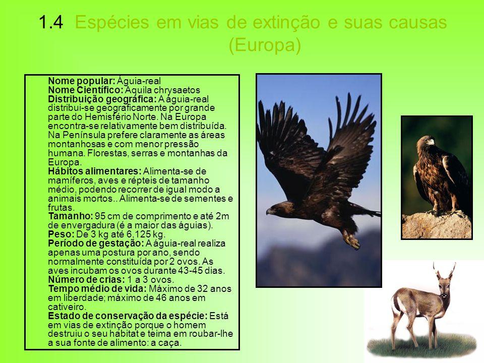 1.4 Espécies em vias de extinção e suas causas (Europa) Nome popular: Águia-real Nome Científico: Aquila chrysaetos Distribuição geográfica: A águia-r