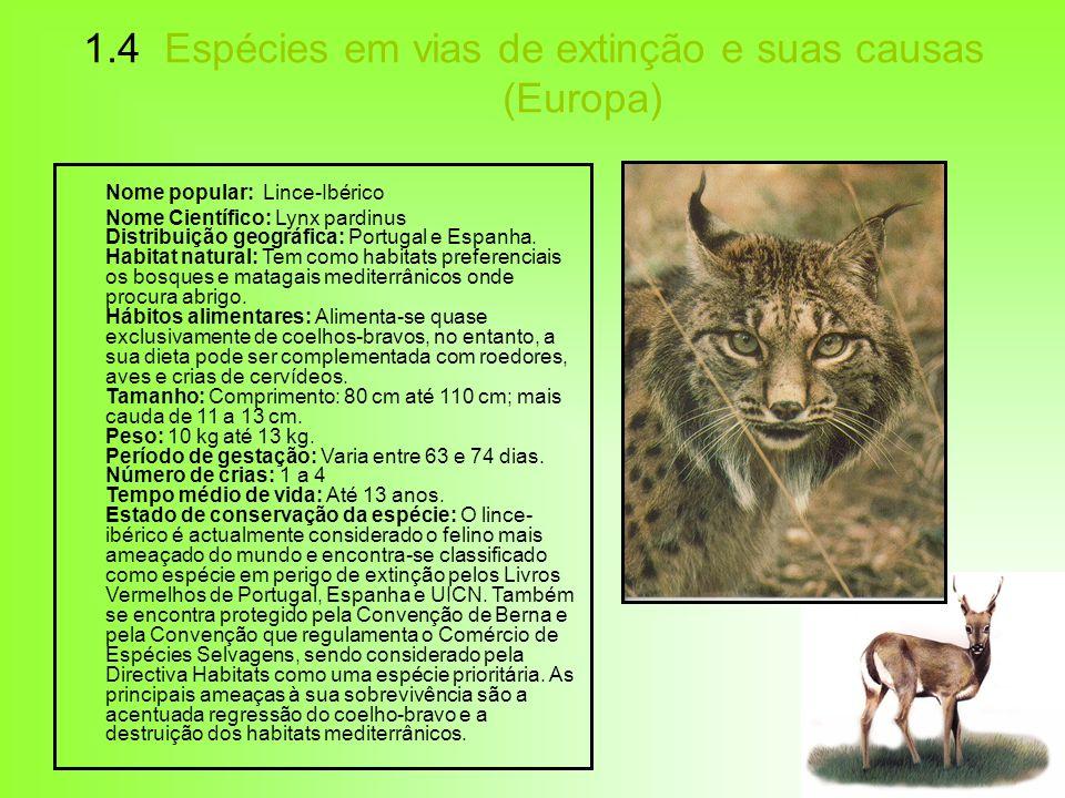 1.4 Espécies em vias de extinção e suas causas (Europa) Nome popular: Lince-Ibérico Nome Científico: Lynx pardinus Distribuição geográfica: Portugal e