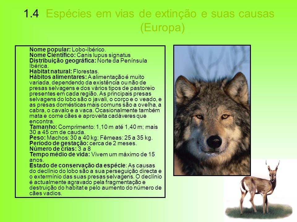1.4 Espécies em vias de extinção e suas causas (Europa) Nome popular: Lobo-Ibérico. Nome Científico: Canis lupus signatus Distribuição geográfica: Nor