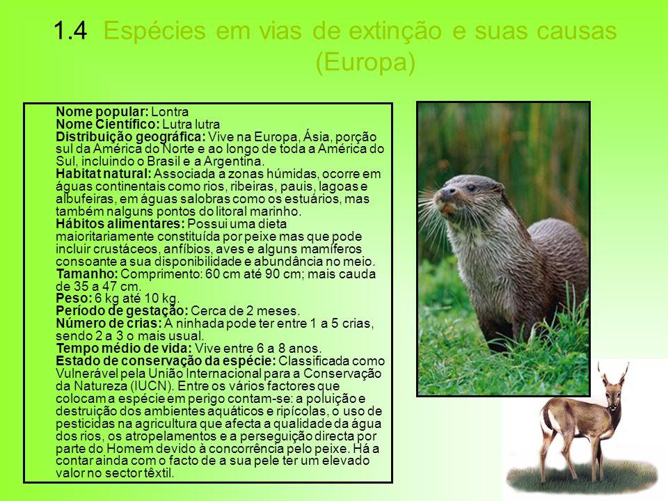 1.4 Espécies em vias de extinção e suas causas (Europa) Nome popular: Lontra Nome Científico: Lutra lutra Distribuição geográfica: Vive na Europa, Ási