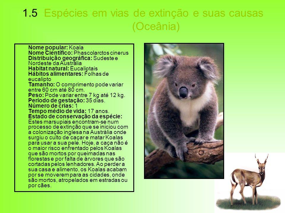 1.5 Espécies em vias de extinção e suas causas (Oceânia) Nome popular: Koala Nome Científico: Phascolarctos cinerus Distribuição geográfica: Sudeste e