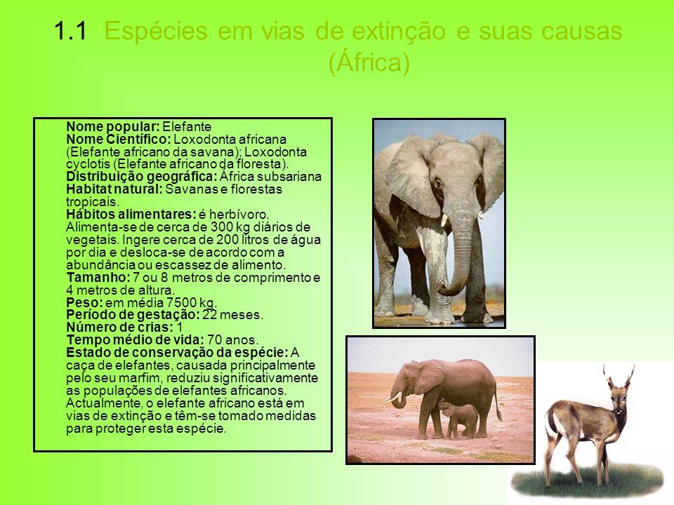1.1 Espécies em vias de extinção e suas causas (África) Nome popular: Elefante Nome Científico: Loxodonta africana (Elefante africano da savana); Loxo