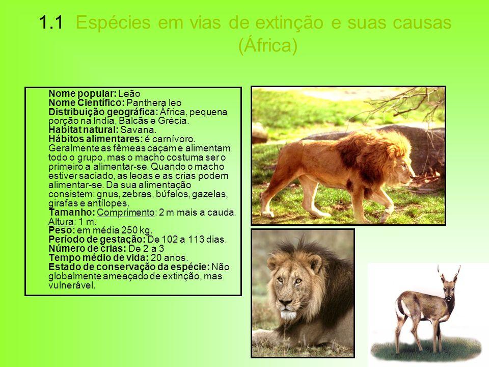1.1 Espécies em vias de extinção e suas causas (África) Nome popular: Leão Nome Científico: Panthera leo Distribuição geográfica: África, pequena porç
