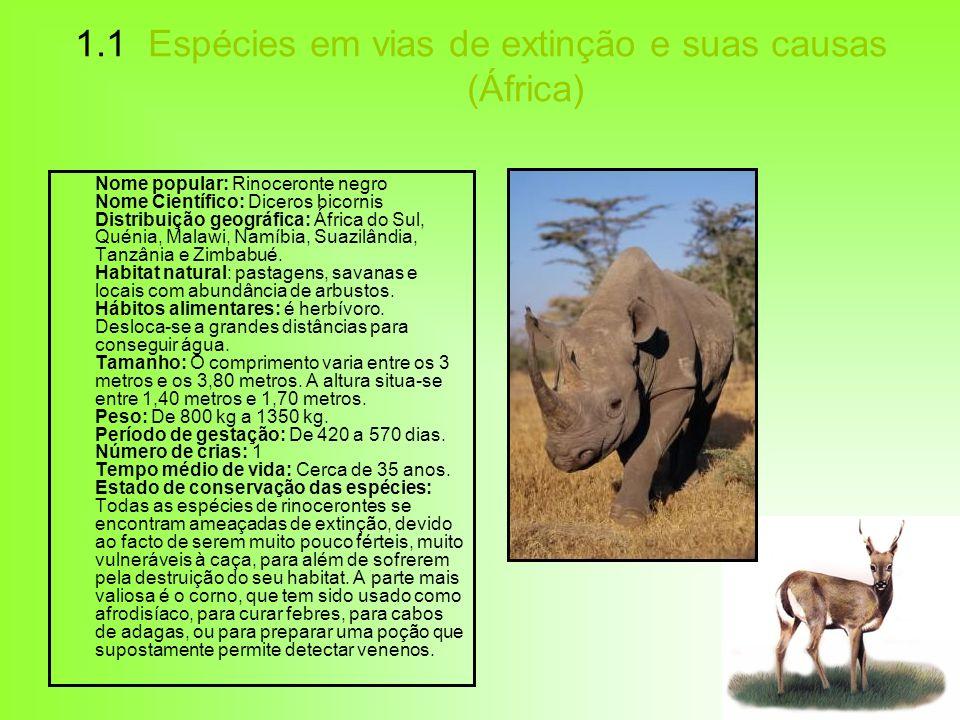 1.1 Espécies em vias de extinção e suas causas (África) Nome popular: Rinoceronte negro Nome Científico: Diceros bicornis Distribuição geográfica: Áfr