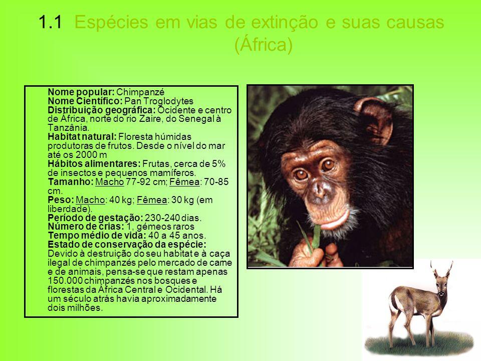 1.1 Espécies em vias de extinção e suas causas (África) Nome popular: Chimpanzé Nome Científico: Pan Troglodytes Distribuição geográfica: Ocidente e c