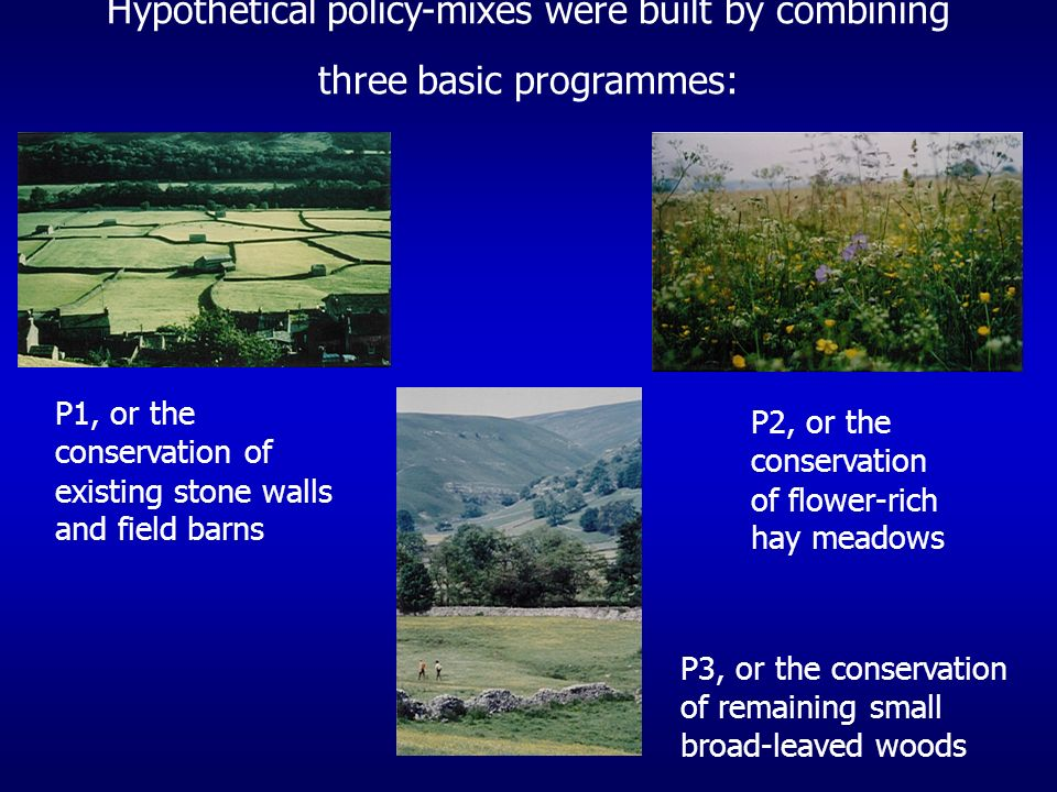Hypothetical policy-mixes were built by combining three basic programmes: P1, or the conservation of existing stone walls and field barns P2, or the conservation of flower-rich hay meadows P3, or the conservation of remaining small broad-leaved woods